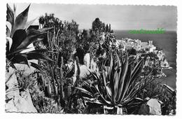 MONACO LOT DE 14 CPSM JARDINS EXOTIQUES - Cactus