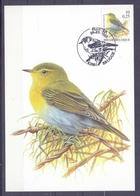 Belgie - 2000 - ** 2936 - Fluiter 09 - 09 - 2000 - Stempel Brugge - A.Buzin - 1985-.. Oiseaux (Buzin)