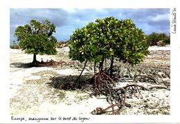TAAF. Photo. Europa, Mangroves Sur Le Bord Du Lagon. - Terres Australes Et Antarctiques Françaises (TAAF)