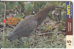URUGUAY - Bird, Garza Colorada(70a), 09/99, Used - Uruguay