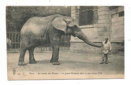 Paris - Au Jardin Des Plantes -Le Grand Eléphant Saïb Et Son Cornac Neff - Arrondissement: 05