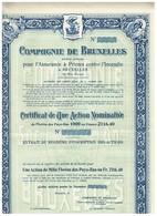 Ancienne Action  Uncirculed - Compagnie De Bruxelles Pour L'Assurance à Primes Contre L'Incendie - Titre De 1915 - Banque & Assurance