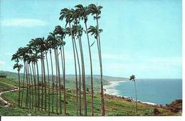 L 371 - Barbade- Bathsheba Coast Line - Postcards