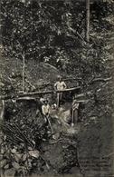 Cp Suriname, Drei Männer Mit Schaufeln, Bäume - Argentine