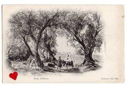 35213-ZE-AFRIQUE-Etude D' Oliviers---------animée - Cartes Postales