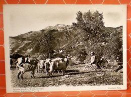 Capre Greggie Pastore Grecia Trikkala Cartolina - Animali