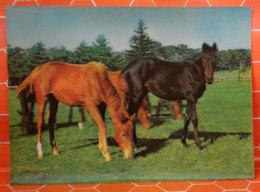 Cavallo Horse Cartolina 1975 3D Effetto Tridimensionale - Cavalli