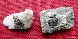 2 MOUSSES ET LICHENS Sur Pierres Du Cap Nord - Minéraux