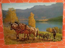Cavallo Horse Aratro Cartolina - Cavalli
