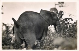 Publ. ZAGOURSKI 2e Série - L'Afrique Qui Disparait - Congo Belge - Eléphant - N° 185 - Congo Belge - Autres