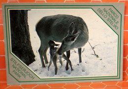 Cervo Cucciolo Cartolina Parco Nazionale Dello Stelvio - Animali