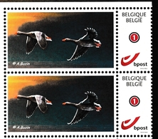 BUZIN.  OIE CENDREE - 1985-.. Oiseaux (Buzin)
