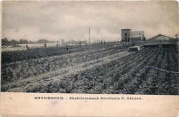 Halle - Buizingen - Buysinghen - Etablissement Horticole C. Gérard - Halle