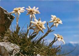CPSM Fleurs-Edelweiss                                  L2733 - Fleurs
