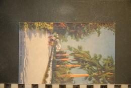 CP, Amérique, Antilles, BERMUDES A Country Road In Bermuda Edition Vulcan Press The RAP Co Ltd London ATTELAGE - Bermudes