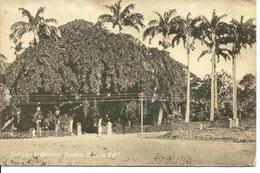 L 383 - Sainte Lucie - St Lucia - Entrance To Botanical Gardens - Cartes Postales