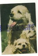 Chien. Dog. Griffon Vendéen. Editeur: Arti Grafiche Barlocchi 309/1 - Chiens