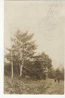 RICHMOND HILL?, Ontario, Canada, Woods Scene With People, 1909 RPPC, S/R Headord Ontario, York County - Ontario