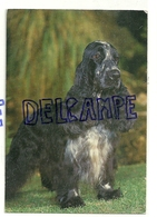 Chien. Dog. Epagneul Bleu De Picardie. Editeur: Garami, Milano 2/2041/N - Chiens