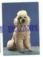 Chien. Dog. Caniche Moyen Blanc Toiletté. Editeur: 2/1016/F - Chiens