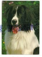 Chien. Dog. Border Collie. Grafiche Barlotti Settimo 309/3 - Chiens