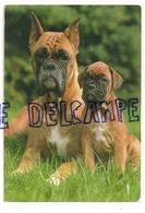 Chien. Dog. Boxer. Verlag Gmbh 49-3048 - Chiens