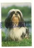 Chien. Dog. à Déterminer: Bichon ? Garami, Milano 2/2041/M - Chiens
