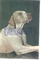 Chien. Dog. à Déterminer: Dogue ? Pointer? Edizioni Saemec S/591 - Chiens