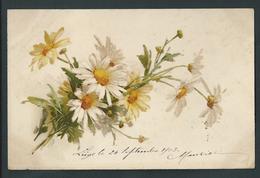 Marguerites Blanches. Litho Signée. Envoyée En 1903 Au Château De Fayembois. 2 Scans. - Fleurs