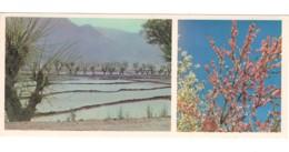 Soviet Uzbekistan Fergana Rice Fields PC Long Format - Ouzbékistan