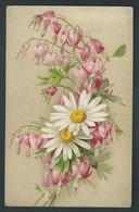 Coeurs De Marie Rose  Et Marguerites Blanches.  Fleurs Emblèmatiques. Litho .2416. - Fleurs