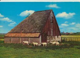 Texel  [AA23-381 - Texel