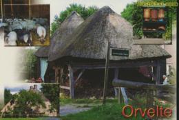Orvelte [AA23-1.255 - Pays-Bas