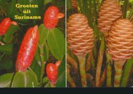 Suriname - Flora Van Suriname [AA23-1.415 - Surinam