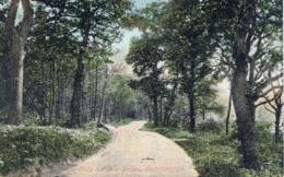 YORKS - SCARBOROUGH - LADY EDITH'S DRIVE  Y2624 - Scarborough