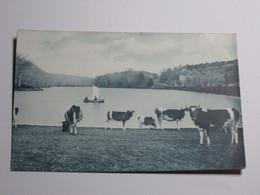 Refboite46 - Foret De Paimpont L'étang Des Forges La Bretagne Artistique Troupeau De Vache - Paimpont
