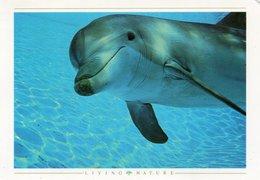 DOLPHIN-LIVING NATURE - Delfini