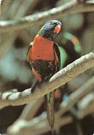 PAPAGALO-RAINBOW LORIKEET - Oiseaux