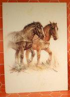 Cavalli Horses Ill. Saubert Cartolina - Chevaux