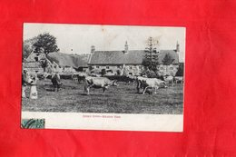 Carte Postale - Jersey Cows Milking Time - Royaume-Uni