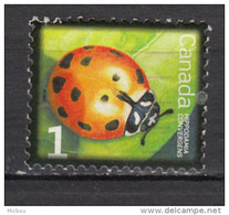 Canada, Insecte, Coccinelle, Ladybug - Insects