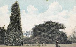 Yew Tree At Ormiston Hall East Lothian Old Postcard - East Lothian