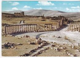Jourdain - La Colonnade De Jerash - Syria