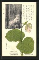 AK Kumagaisoo, Cypripedium Japonicum, Frauenschuh - Ohne Zuordnung
