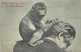 PARIS - Jardin Des Plantes, Singe Macaque. - Singes