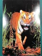 MACAU CHINESE NEW YEAR OF THE TIGER POST CARD BY MACAU PHILATELUC CLUB - Chine