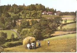 Montagne De DUN (71) Un Paysage - Les Foins , Petit Attelage  RARE CPSM  GF - Autres Communes