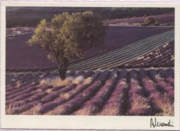 CPM - Photo ALESSANDRI J.F. - PROVENCE - Edition Pierron / N°561 - Provence-Alpes-Côte D'Azur