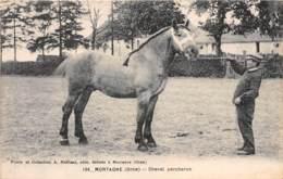 61 - Orne / 10138 - Mortagne - Cheval Percheron - France