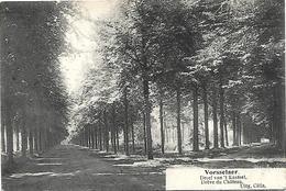 Vorsselaer - Dreef Van 't Kasteel. - Vorselaar